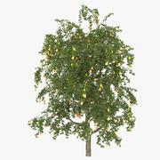 Pear Tree 3d model