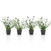 Nane Bitki Saksısı 3d model