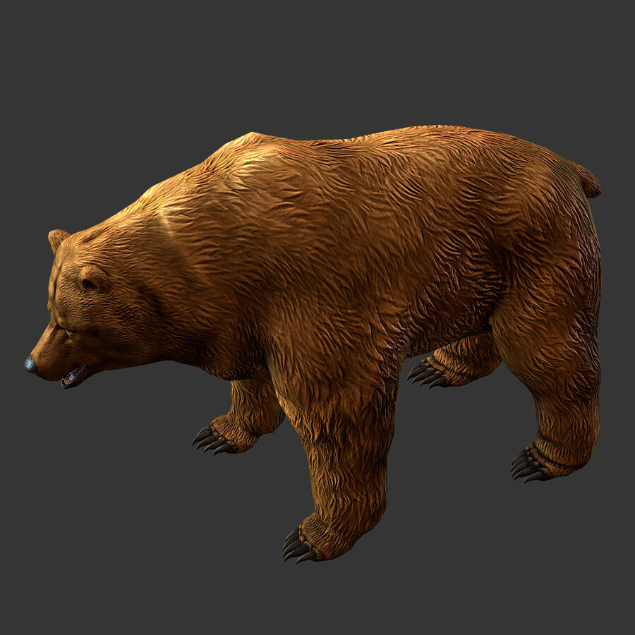 Niedźwiedź grizzly royalty-free 3d model - Preview no. 2