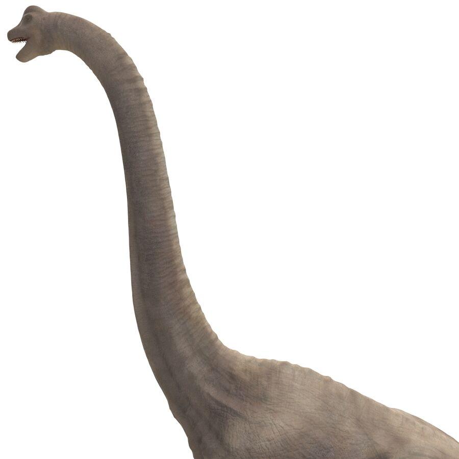 Brachiosaurus royalty-free 3d model - Preview no. 8