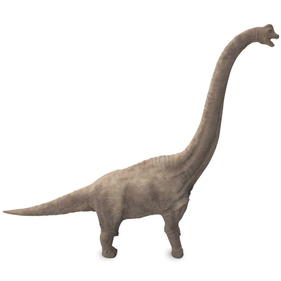 Brachiosaurus royalty-free 3d model - Preview no. 5