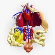 Groda anatomi 3d model