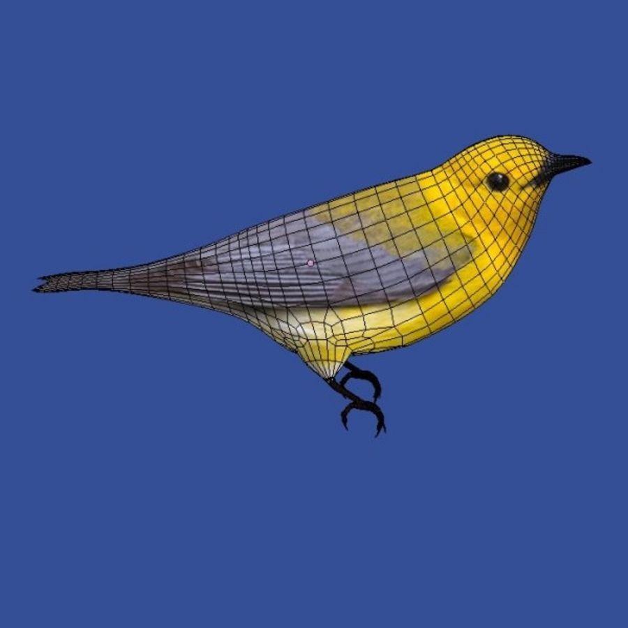 AB Warbler01 royalty-free 3d model - Preview no. 8