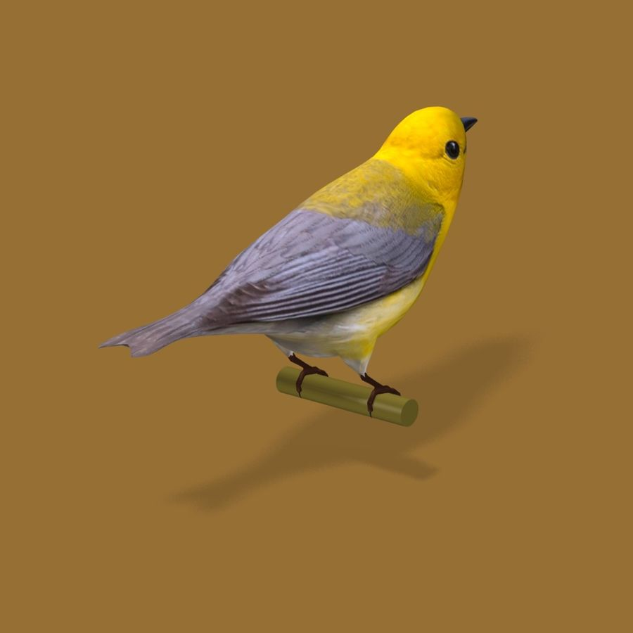 AB Warbler01 royalty-free 3d model - Preview no. 2