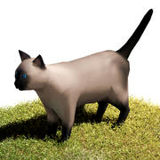 Cat Siamese 3d model