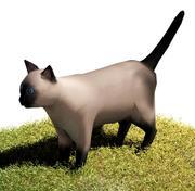 Cat Siamese 3d model
