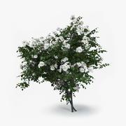Buisson de roses 3d model