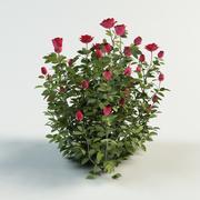 rose bush shrub 3d model