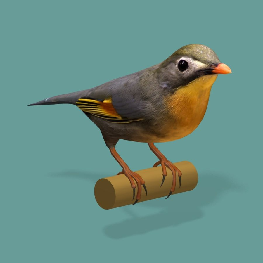 AB Pekin Robin royalty-free 3d model - Preview no. 3