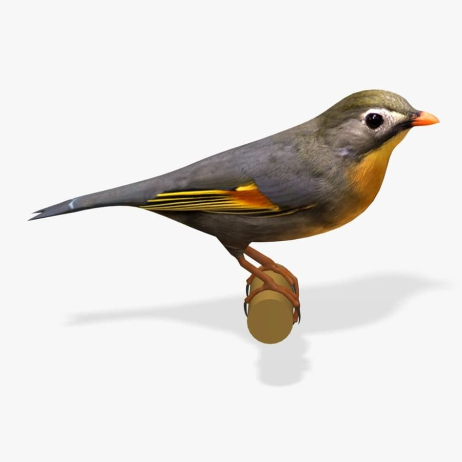 AB Pekin Robin royalty-free 3d model - Preview no. 1