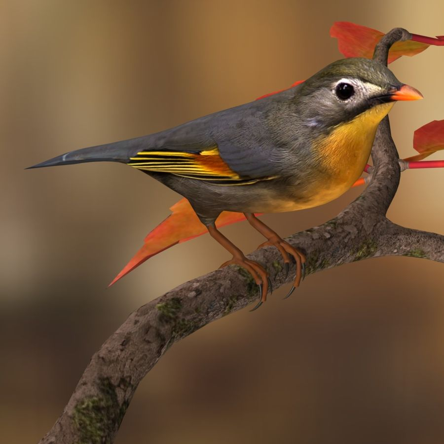 AB Pekin Robin royalty-free 3d model - Preview no. 5
