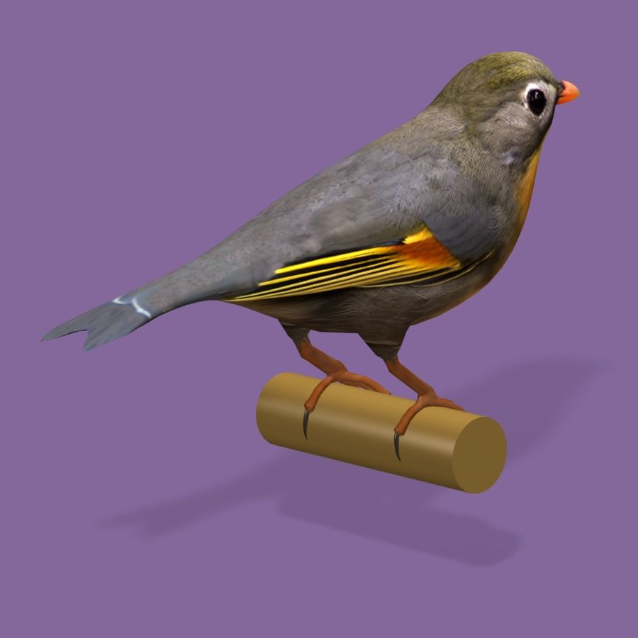 AB Pekin Robin royalty-free 3d model - Preview no. 2