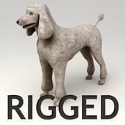 Пудель Rigged 3d model