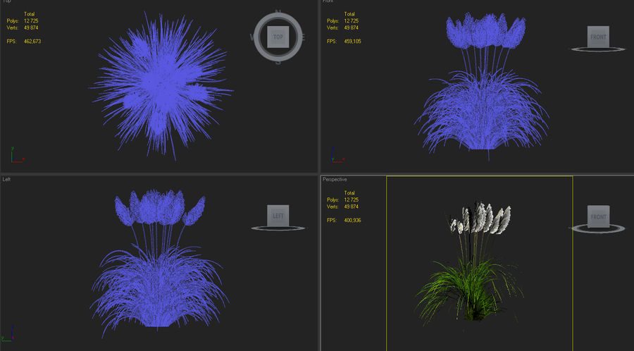 Pampas Grass royalty-free 3d model - Preview no. 5