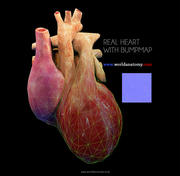Heart Textured Bumpmap 3d model