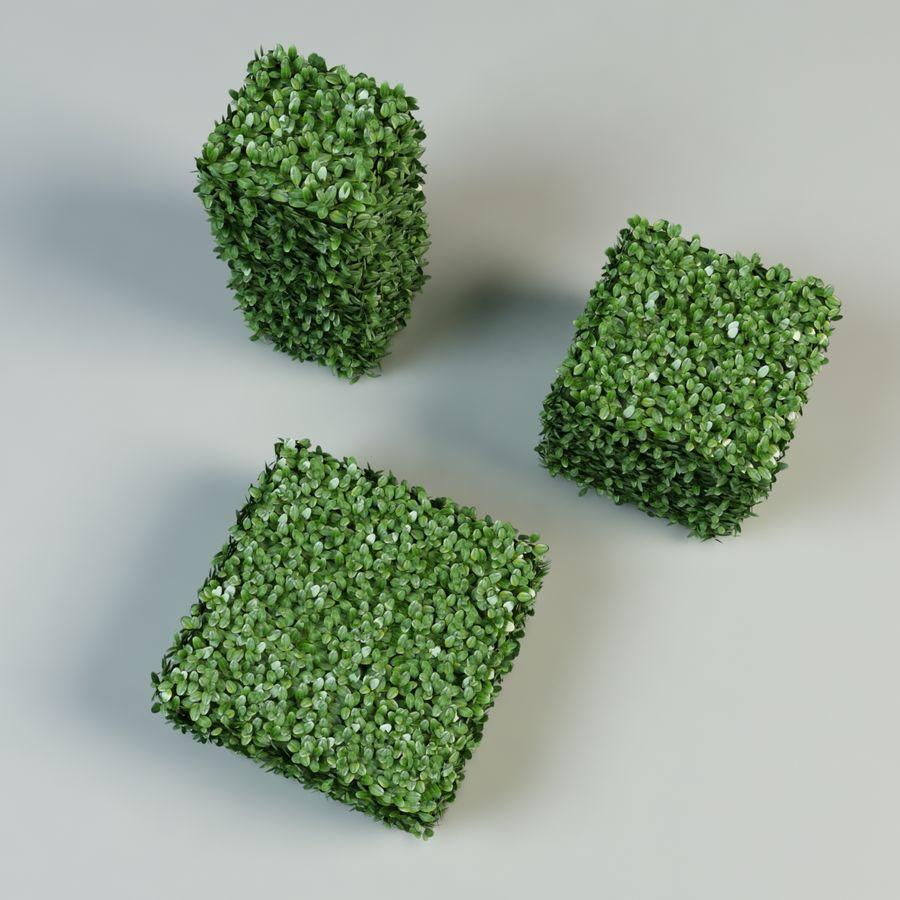 boxwood bush topiary royalty-free 3d model - Preview no. 3