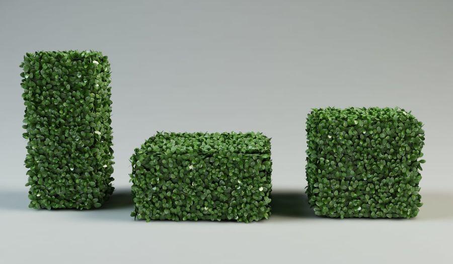 boxwood bush topiary royalty-free 3d model - Preview no. 4