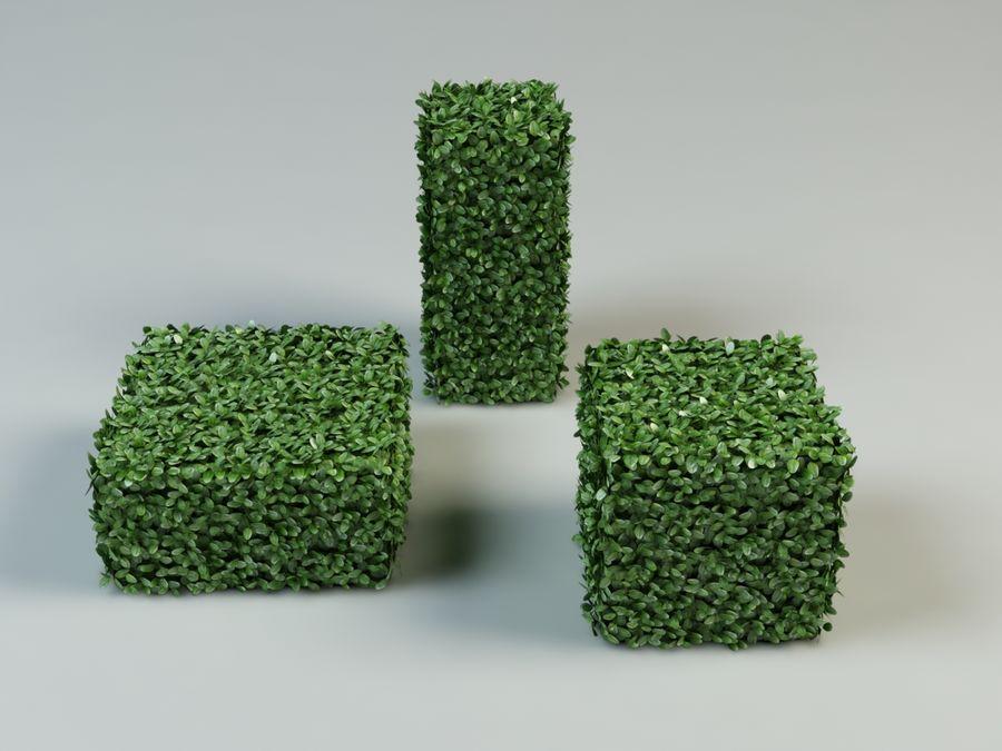 boxwood bush topiary royalty-free 3d model - Preview no. 2