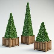 topiary pyramidal buxus bush 3d model