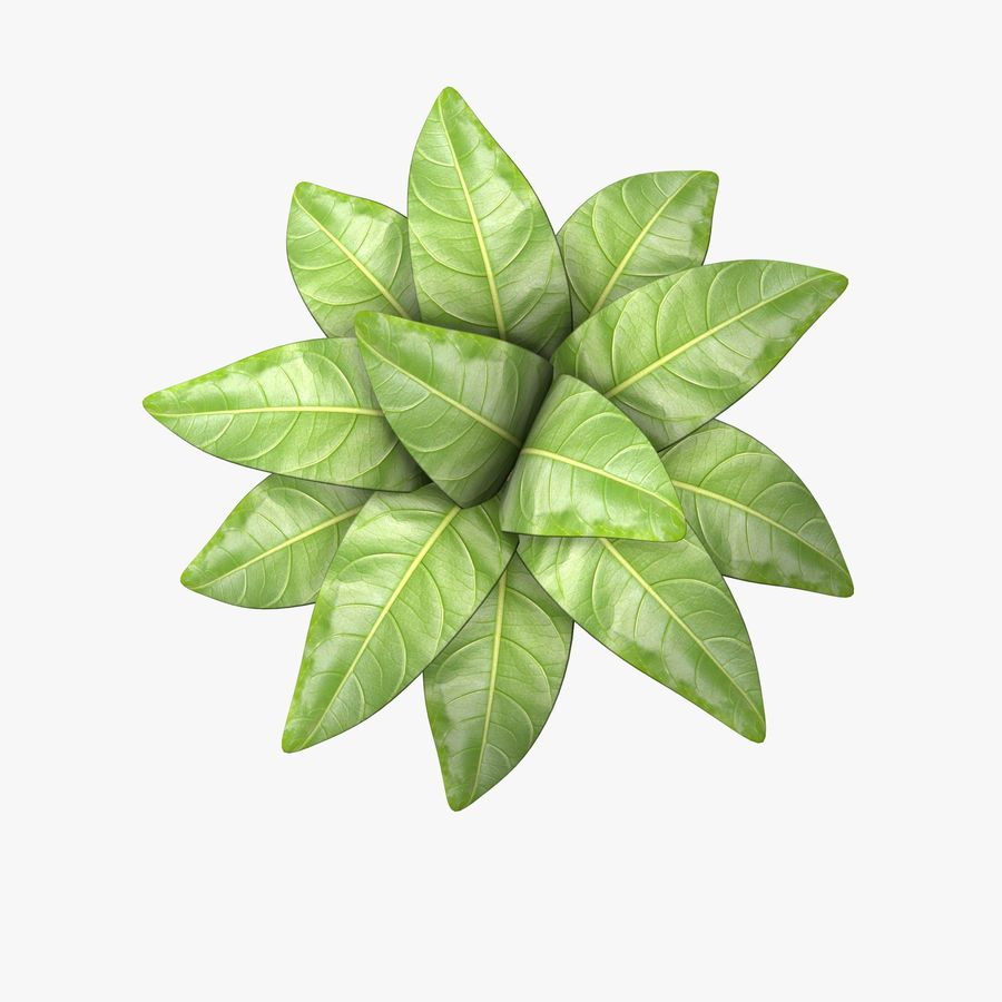 Pot Plant royalty-free 3d model - Preview no. 3