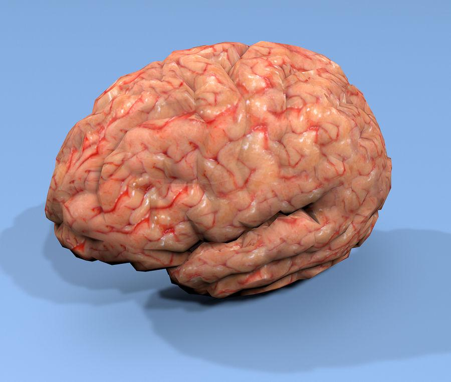 Halv hjärnstruktur texturerad royalty-free 3d model - Preview no. 2