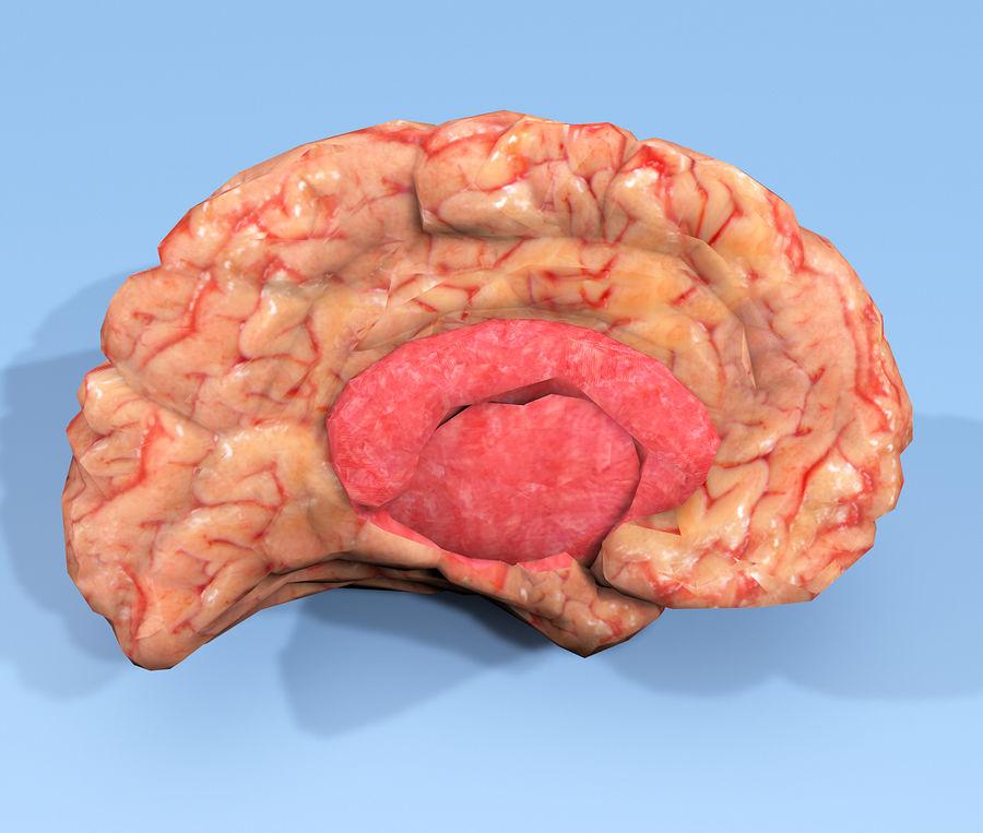 Halv hjärnstruktur texturerad royalty-free 3d model - Preview no. 6