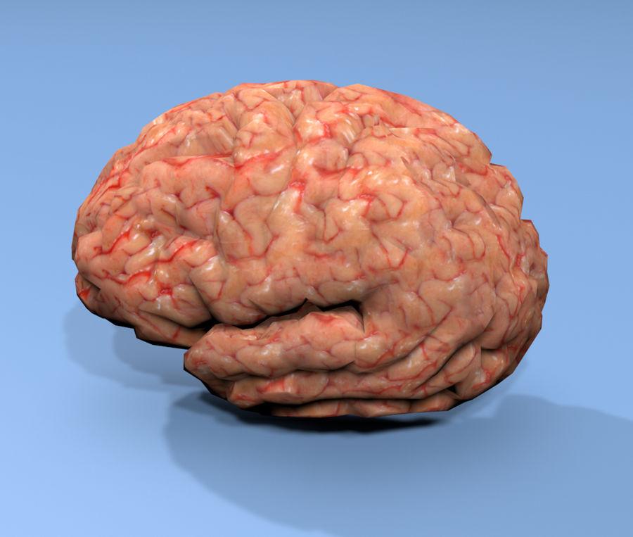 Halv hjärnstruktur texturerad royalty-free 3d model - Preview no. 4