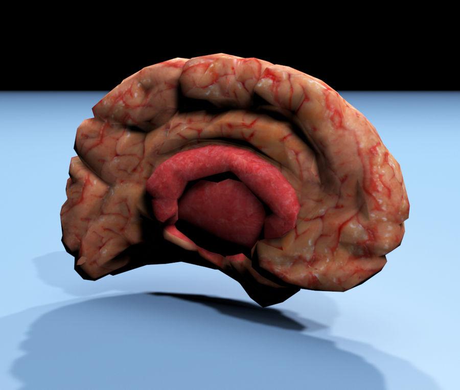 Halv hjärnstruktur texturerad royalty-free 3d model - Preview no. 3