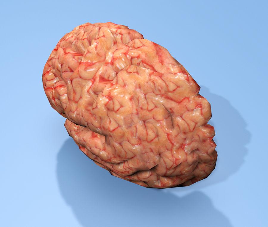Halv hjärnstruktur texturerad royalty-free 3d model - Preview no. 5