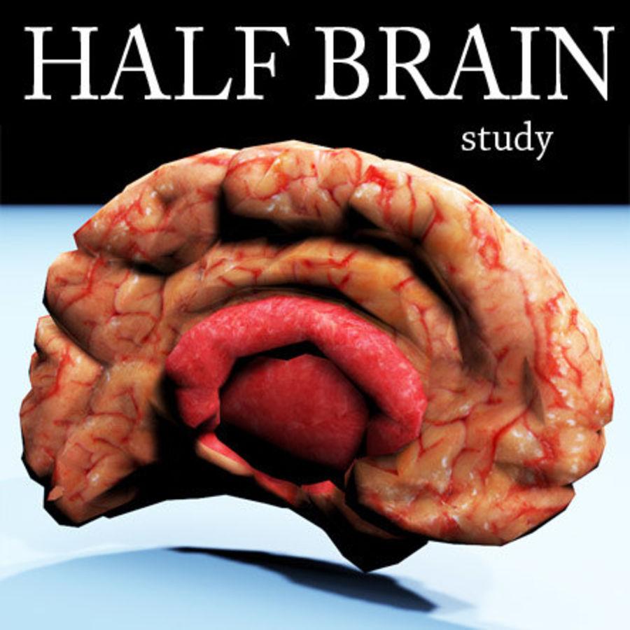 Halv hjärnstruktur texturerad royalty-free 3d model - Preview no. 1