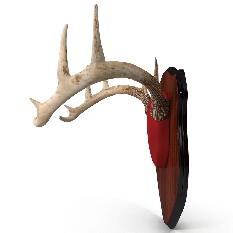 Mounted Deer Antlers royalty-free 3d model - Preview no. 7