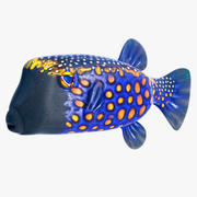 Blue Boxfish 3d model