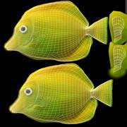 Pesce tropicale Tang giallo 3d model