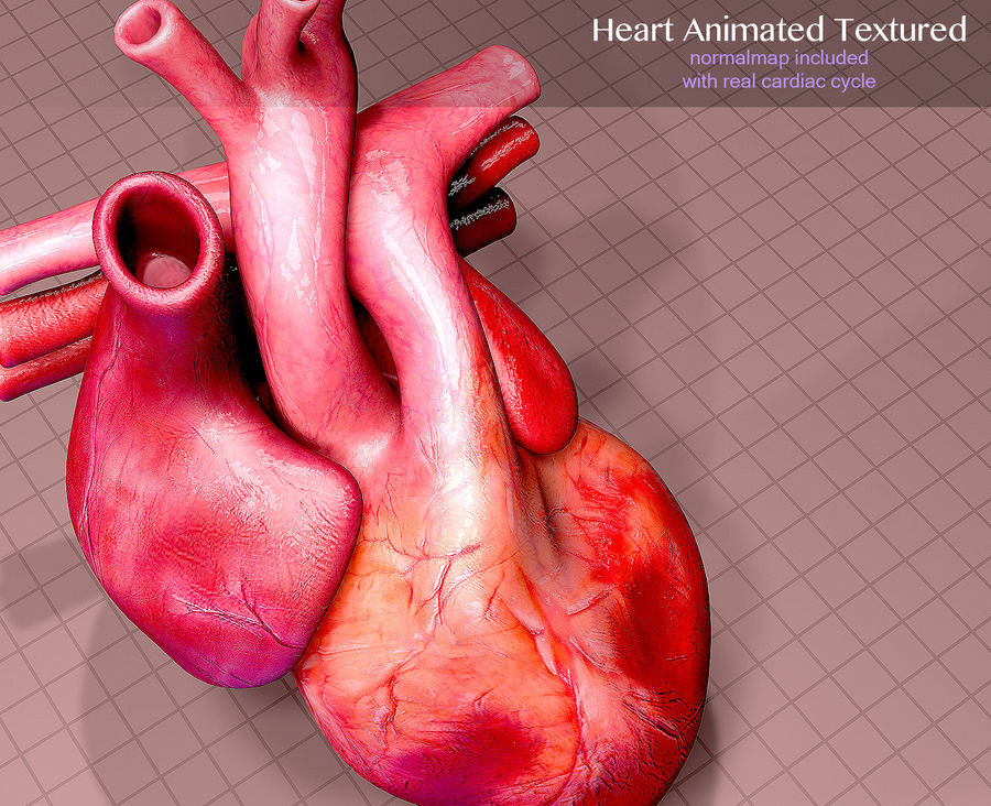 Heart Anatomy Animated royalty-free 3d model - Preview no. 6