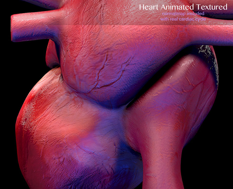 Heart Anatomy Animated royalty-free 3d model - Preview no. 7