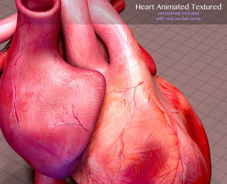 Animowana anatomia serca royalty-free 3d model - Preview no. 8