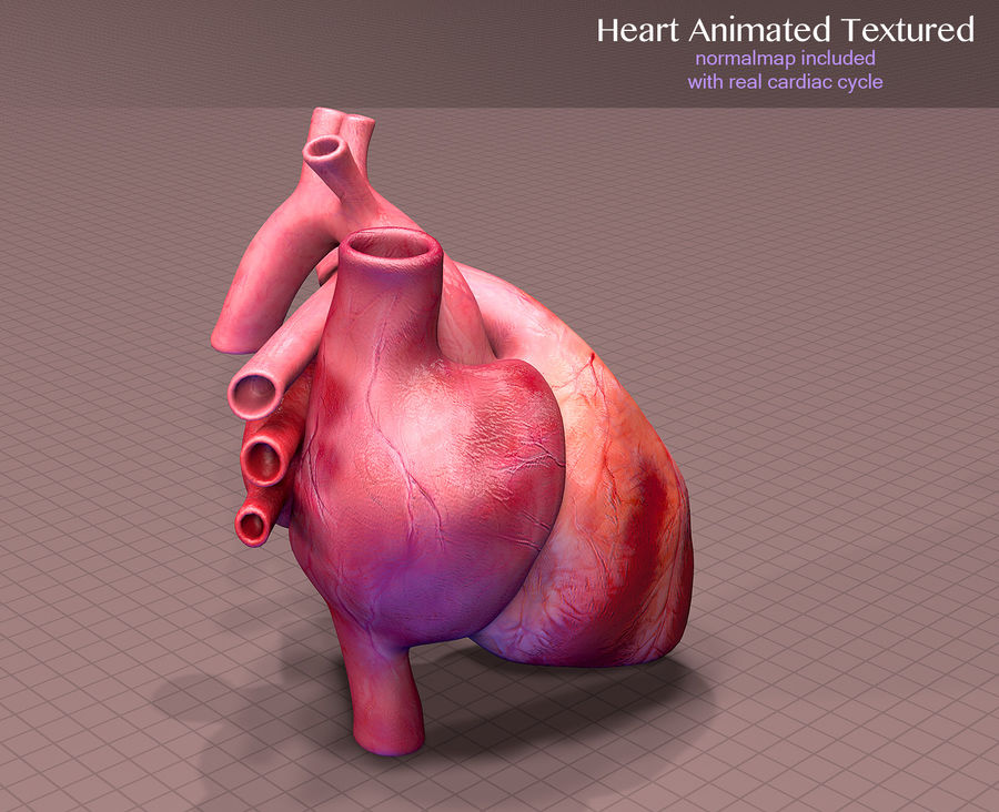 Heart Anatomy Animated royalty-free 3d model - Preview no. 4