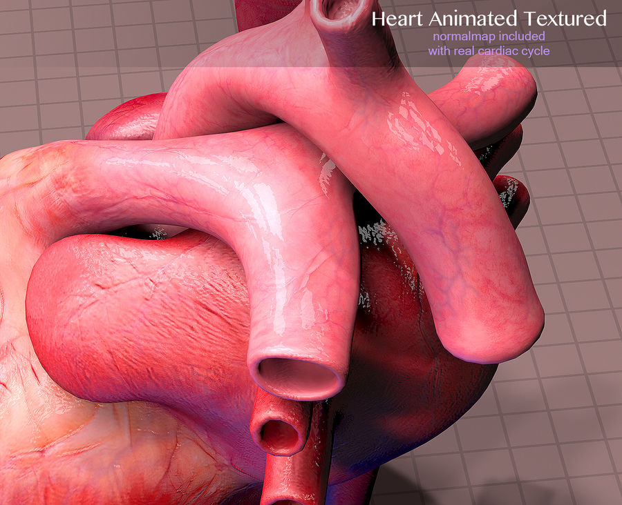 Heart Anatomy Animated royalty-free 3d model - Preview no. 9