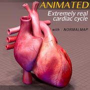 Anatomie du coeur animée 3d model