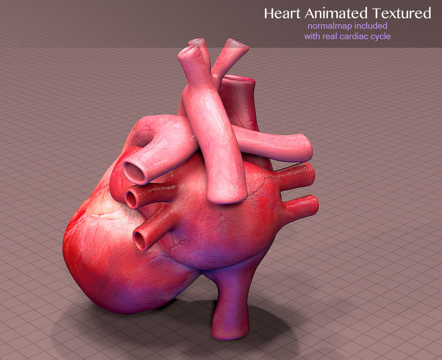 Heart Anatomy Animated royalty-free 3d model - Preview no. 5