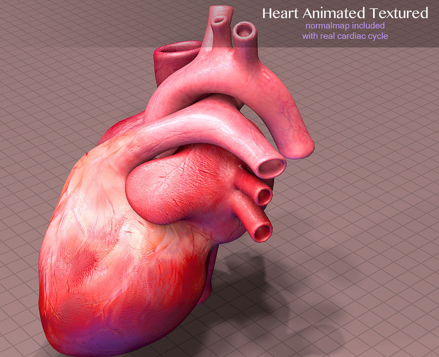 Heart Anatomy Animated royalty-free 3d model - Preview no. 3