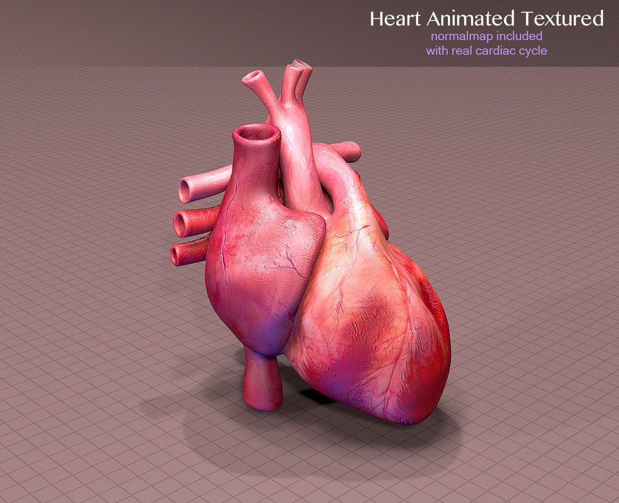 Heart Anatomy Animated royalty-free 3d model - Preview no. 2