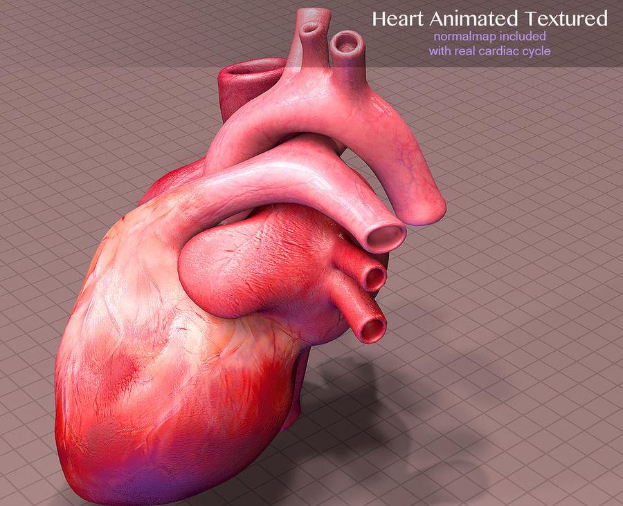 Heart Anatomy Animated 3D Model $30 - .oth .dxf .fbx .obj .3ds .c4d ...