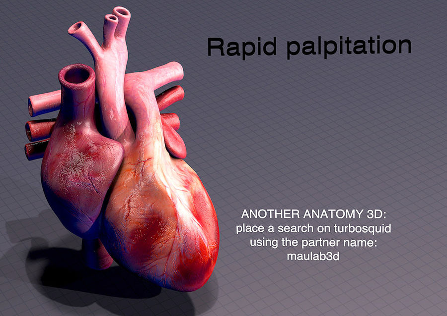 Heart Anatomy Animated royalty-free 3d model - Preview no. 14