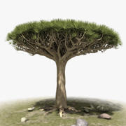 Dragon Tree Set 3d model