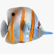 Buterfly Tropical Fish 3d model