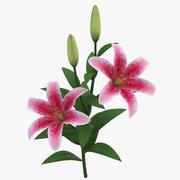 Şube Lily 3d model