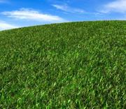 Realistic grass 3d model