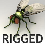 Rigged Fly 3d model