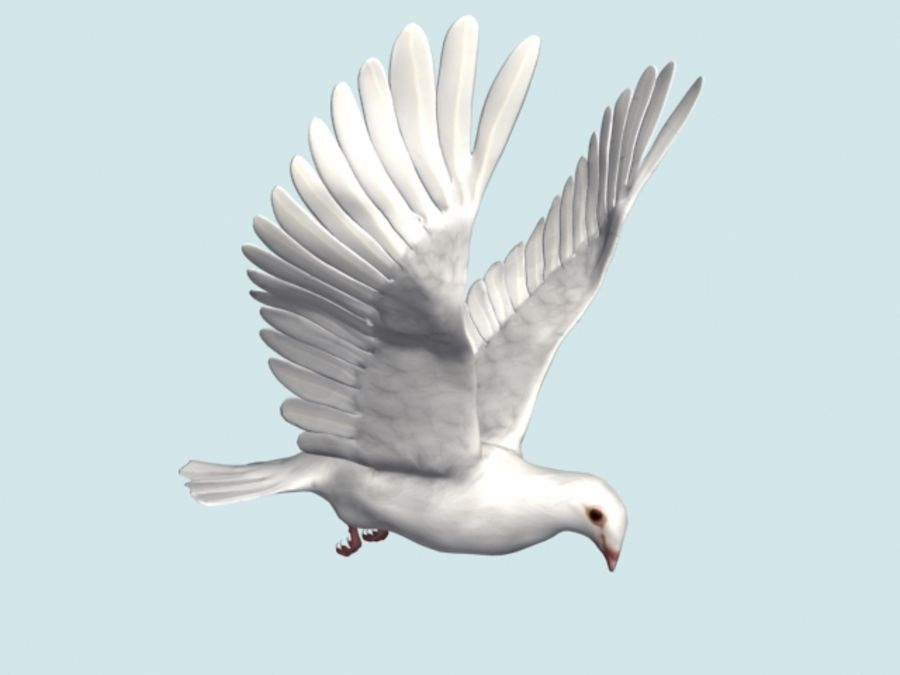Model 3D animowany w technologii Low Poly Dove royalty-free 3d model - Preview no. 3